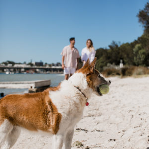 Pet-friendly holidaying: How to make sure your next staycation is pet approved