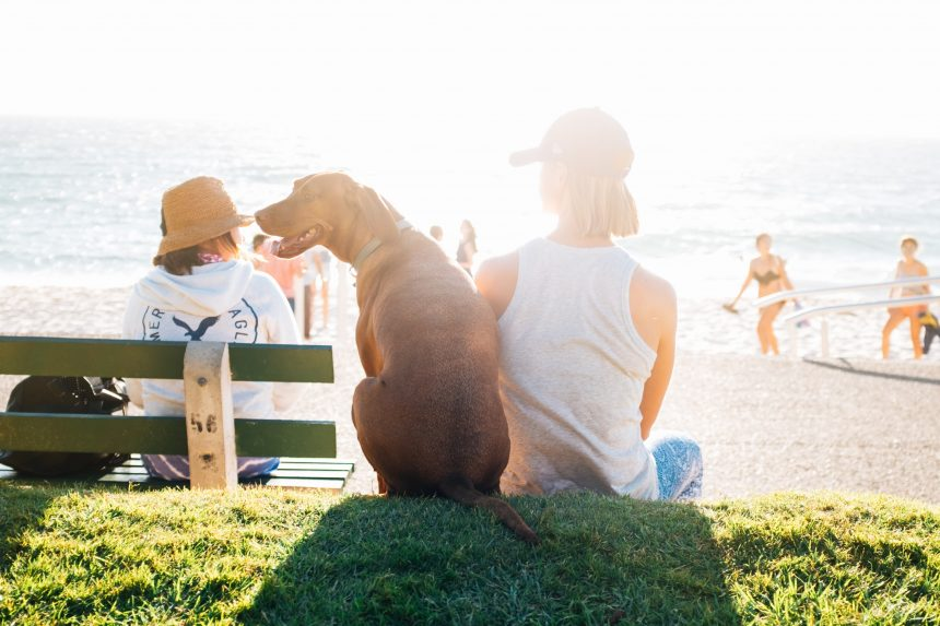 Five top dog-friendly places to visit in Fremantle